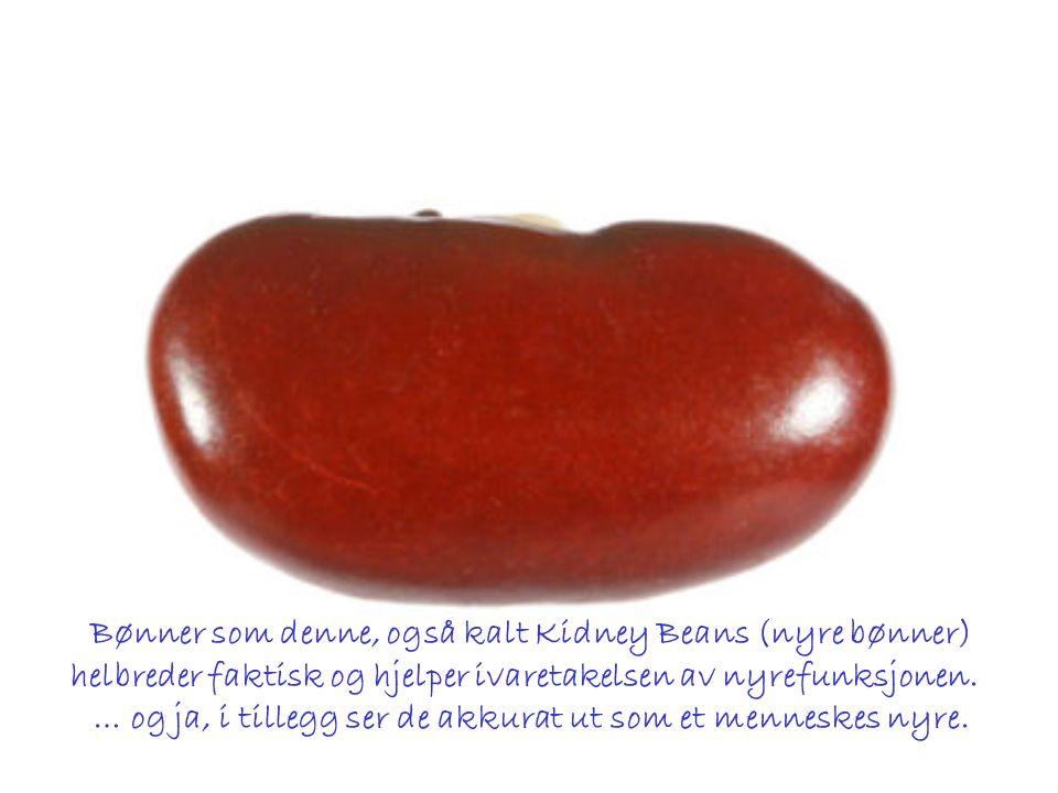 Bønner som denne, også kalt Kidney Beans (nyre bønner) helbreder faktisk og hjelper ivaretakelsen av nyrefunksjonen.