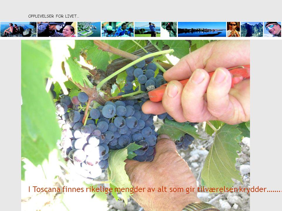 OPPLEVELSER FOR LIVET… I Toscana finnes rikelige mengder av alt som gir tilværelsen krydder……..
