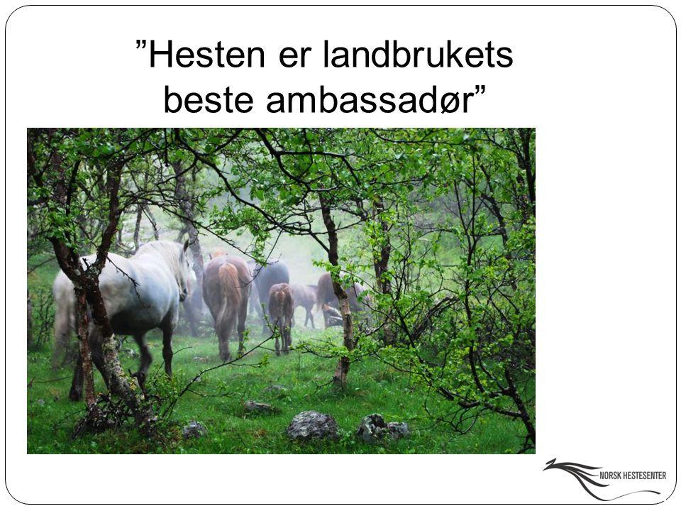 """""""Hesten er landbrukets beste ambassadør"""""""