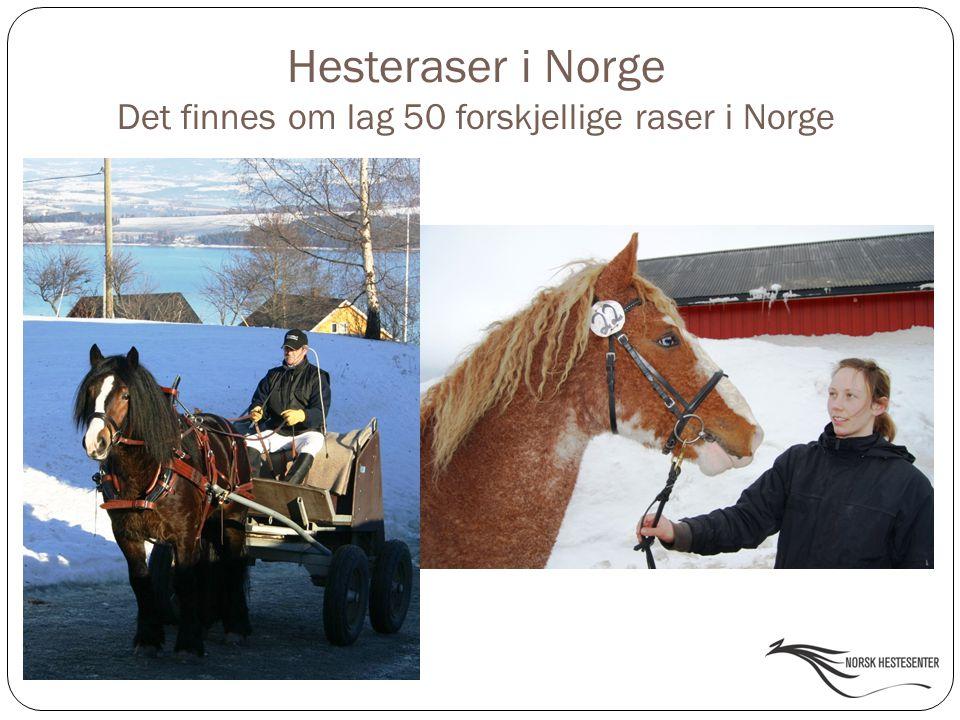 Hesteraser i Norge Det finnes om lag 50 forskjellige raser i Norge
