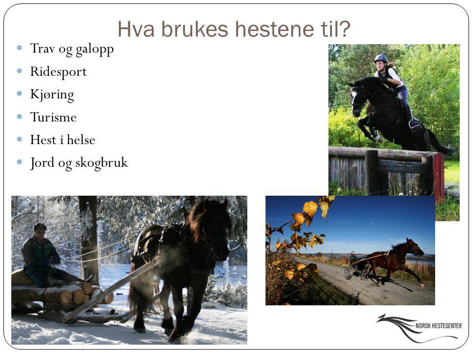 Hva brukes hestene til? Trav og galopp Ridesport Kjøring Turisme Hest i helse Jord og skogbruk
