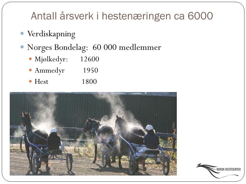 Norge vs.Sverige Antall hester: Norge 60 000 Sverige 280 000 Antall innbyggere pr.