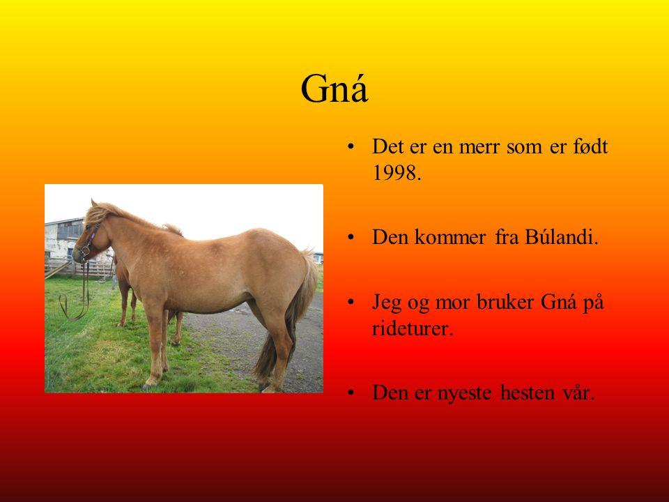 Gná Det er en merr som er født 1998. Den kommer fra Búlandi. Jeg og mor bruker Gná på rideturer. Den er nyeste hesten vår.