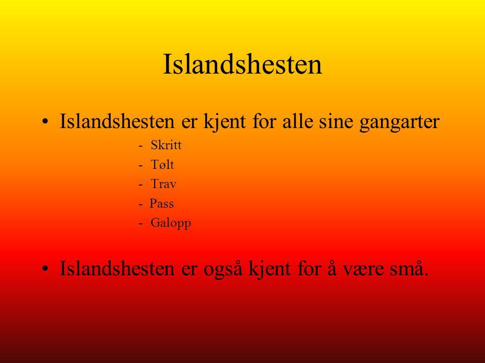 Islandshesten Islandshesten er kjent for alle sine gangarter -Skritt -Tølt -Trav - Pass -Galopp Islandshesten er også kjent for å være små.