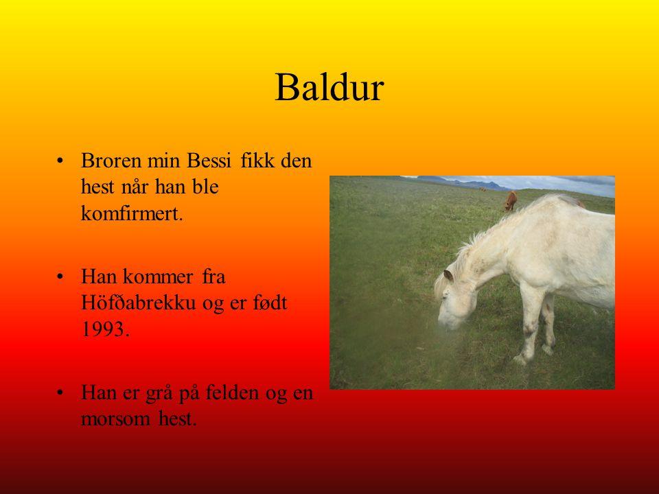 Baldur Broren min Bessi fikk den hest når han ble komfirmert. Han kommer fra Höfðabrekku og er født 1993. Han er grå på felden og en morsom hest.