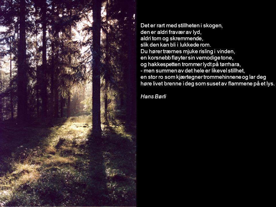 Det er rart med stillheten i skogen, den er aldri fravær av lyd, aldri tom og skremmende, slik den kan bli i lukkede rom. Du hører trærnes mjuke risli