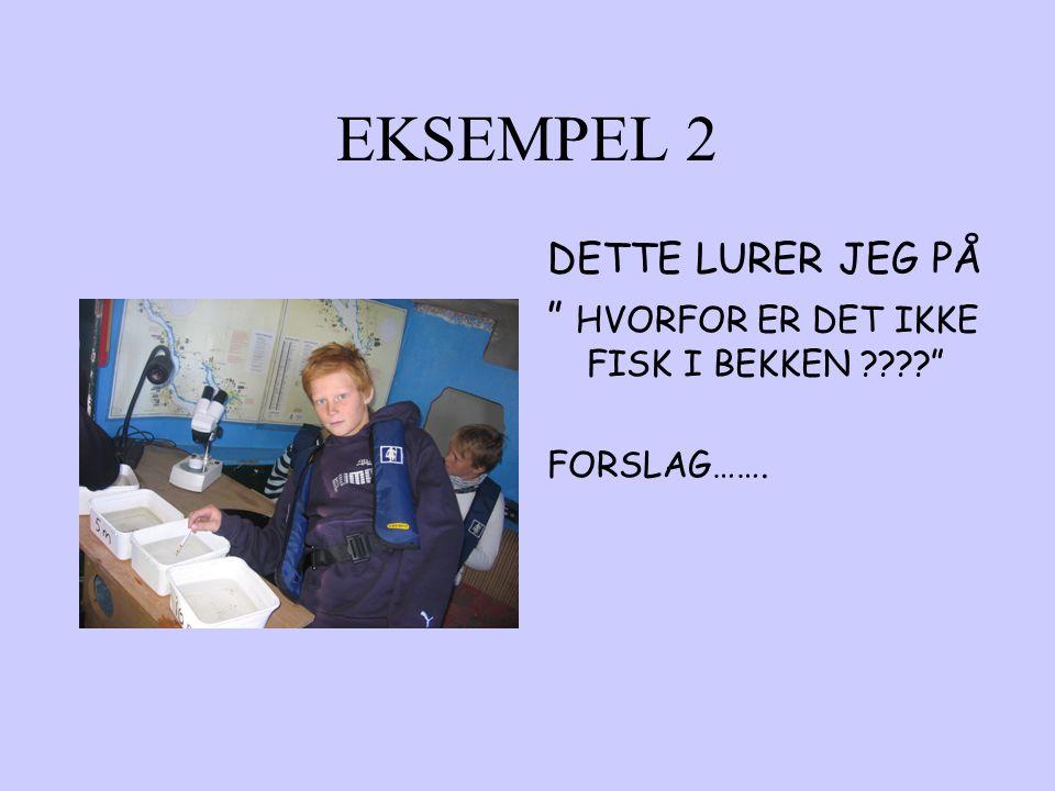 """EKSEMPEL 2 DETTE LURER JEG PÅ """" HVORFOR ER DET IKKE FISK I BEKKEN ????"""" FORSLAG……."""