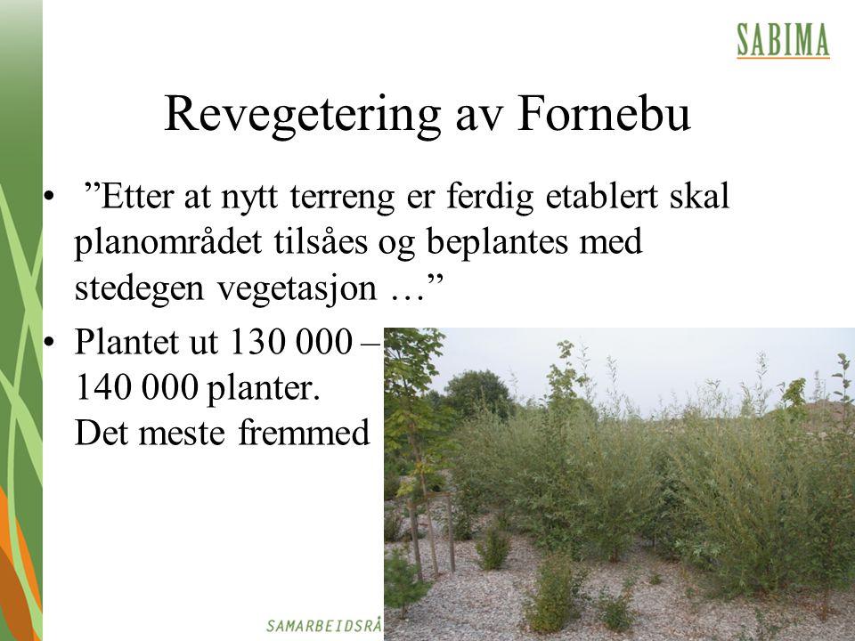 """Revegetering av Fornebu """"Etter at nytt terreng er ferdig etablert skal planområdet tilsåes og beplantes med stedegen vegetasjon …"""" Plantet ut 130 000"""
