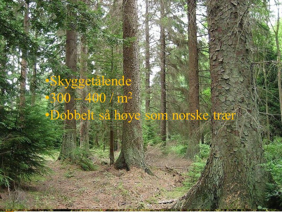 Skyggetålende 300 – 400 / m 2 Dobbelt så høye som norske trær