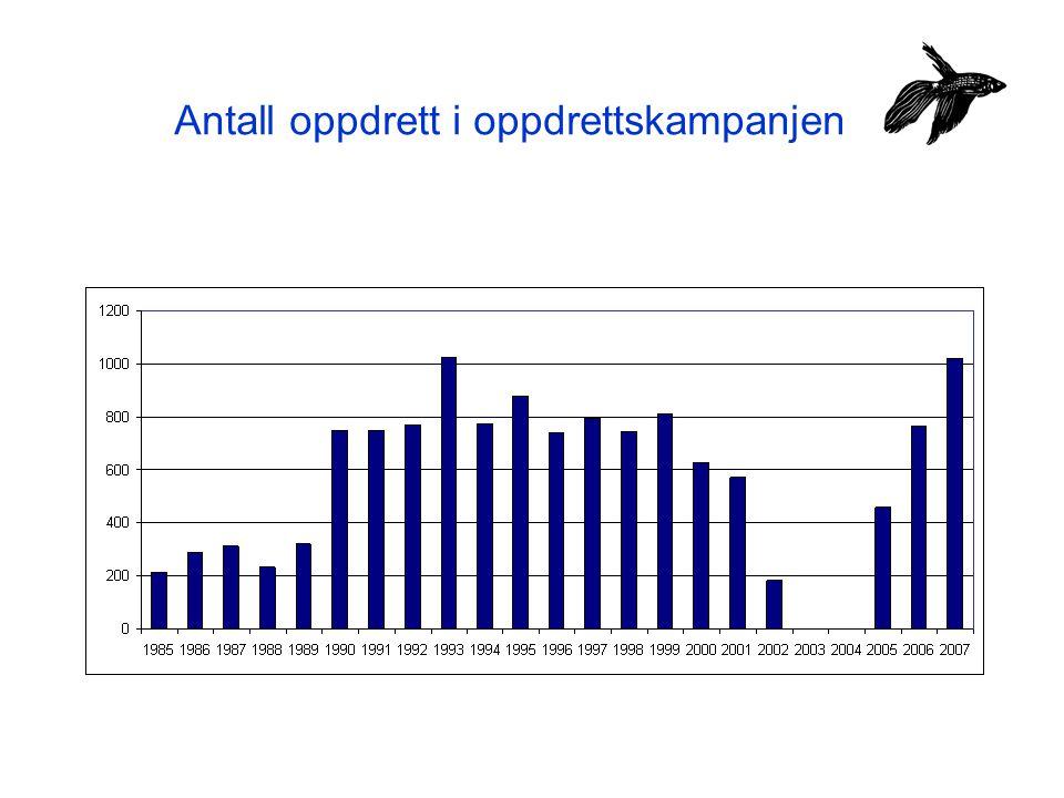 Antall oppdrett i oppdrettskampanjen