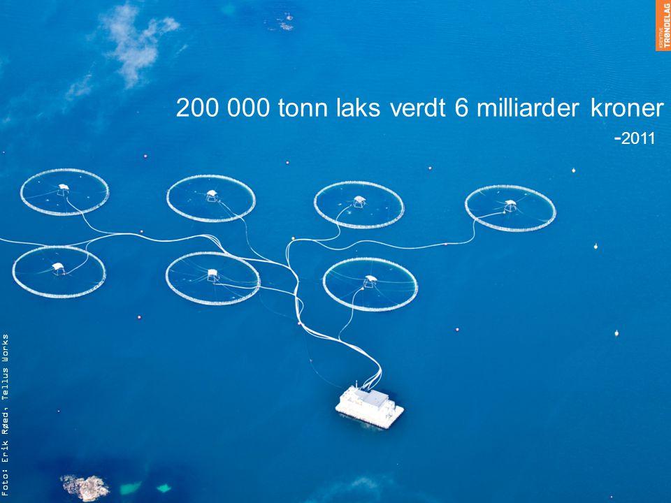 Foto: Erik Røed, Tellus Works 200 000 tonn laks verdt 6 milliarder kroner - 2011