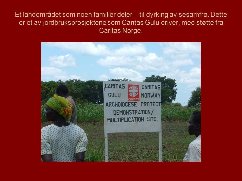 Et landområdet som noen familier deler – til dyrking av sesamfrø.