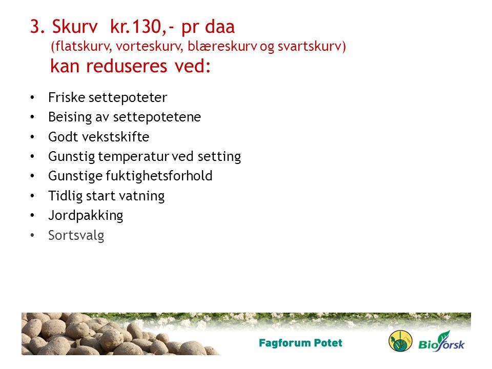 3. Skurv kr.130,- pr daa (flatskurv, vorteskurv, blæreskurv og svartskurv) kan reduseres ved: Friske settepoteter Beising av settepotetene Godt veksts