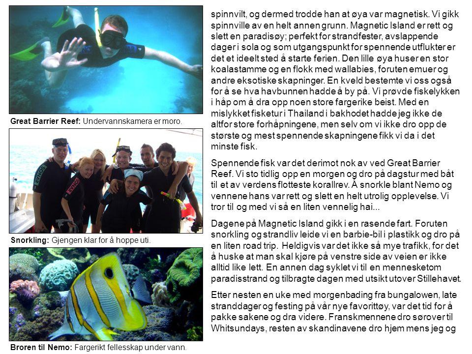 Great Barrier Reef: Undervannskamera er moro. Snorkling: Gjengen klar for å hoppe uti. Broren til Nemo: Fargerikt fellesskap under vann. spinnvilt, og