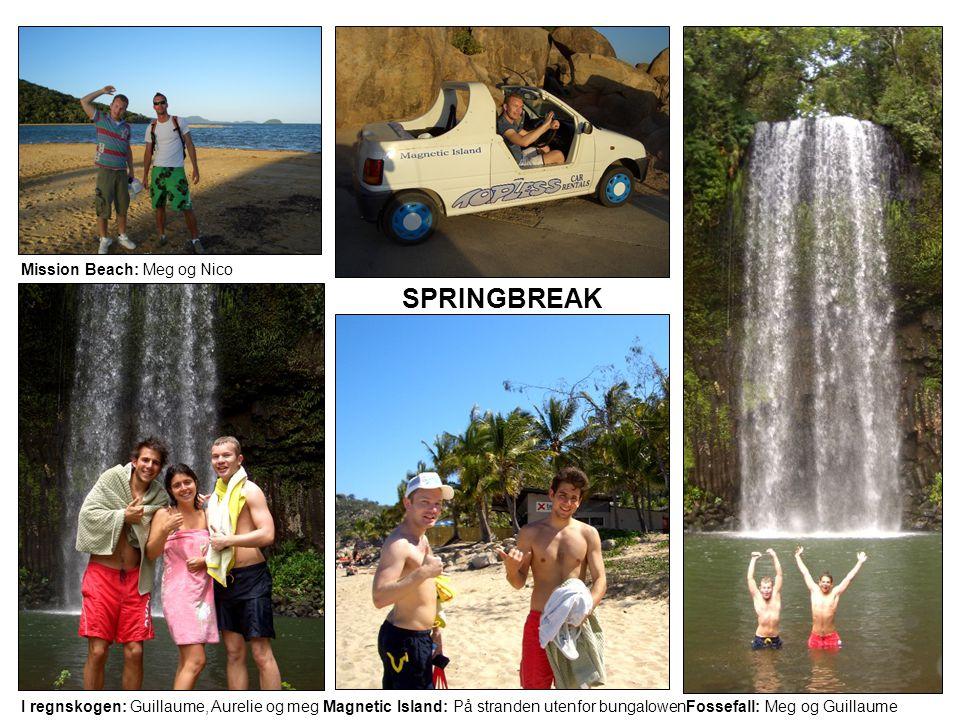 Mission Beach: Meg og Nico SPRINGBREAK I regnskogen: Guillaume, Aurelie og megMagnetic Island: På stranden utenfor bungalowenFossefall: Meg og Guillau