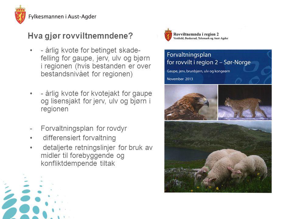 Hva gjør rovviltnemndene? - årlig kvote for betinget skade- felling for gaupe, jerv, ulv og bjørn i regionen (hvis bestanden er over bestandsnivået fo