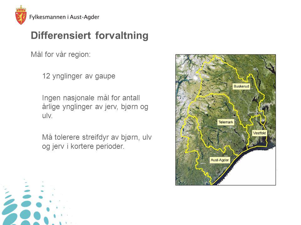 Differensiert forvaltning Mål for vår region: 12 ynglinger av gaupe Ingen nasjonale mål for antall årlige ynglinger av jerv, bjørn og ulv. Må tolerere