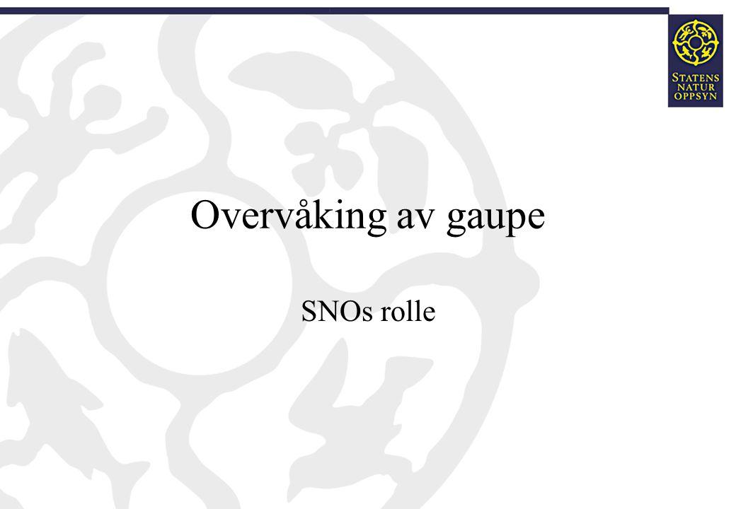 Overvåking av gaupe SNO er ansvarlig for å kvalitetssikre alle tilfeldige meldinger om familiegrupper av gaupe.