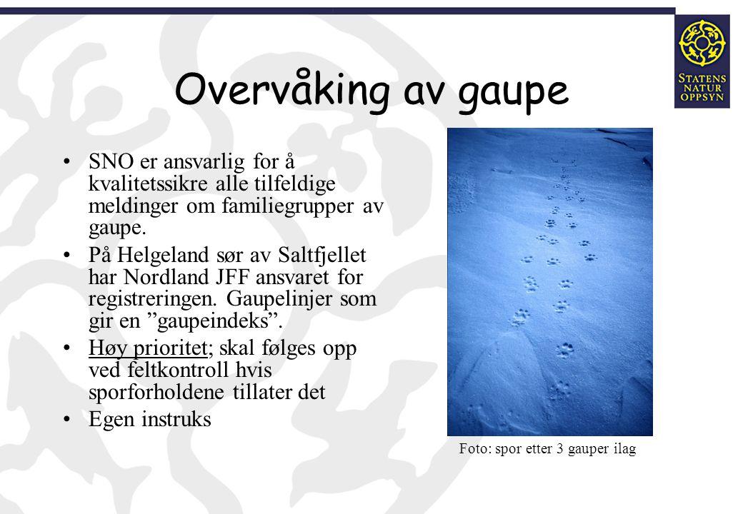 Overvåking av gaupe SNO er ansvarlig for å kvalitetssikre alle tilfeldige meldinger om familiegrupper av gaupe. På Helgeland sør av Saltfjellet har No