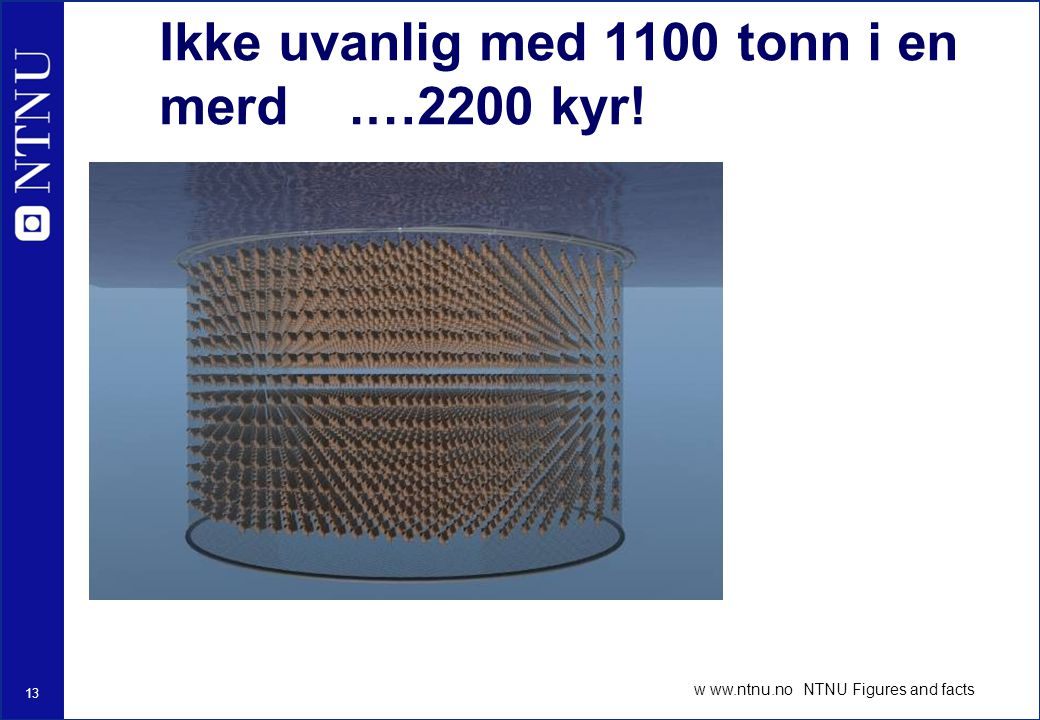 13 w ww.ntnu.no NTNU Figures and facts Ikke uvanlig med 1100 tonn i en merd.…2200 kyr!
