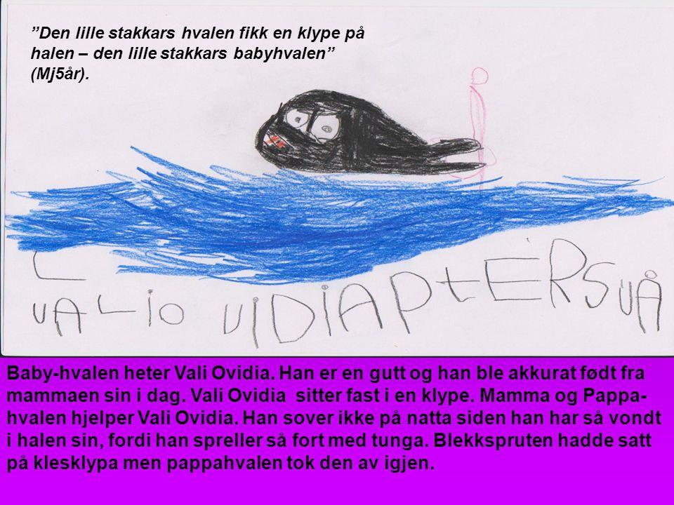 Baby-hvalen heter Vali Ovidia. Han er en gutt og han ble akkurat født fra mammaen sin i dag. Vali Ovidia sitter fast i en klype. Mamma og Pappa- hvale