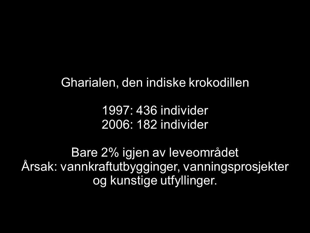 Gharialen, den indiske krokodillen 1997: 436 individer 2006: 182 individer Bare 2% igjen av leveområdet Årsak: vannkraftutbygginger, vanningsprosjekte