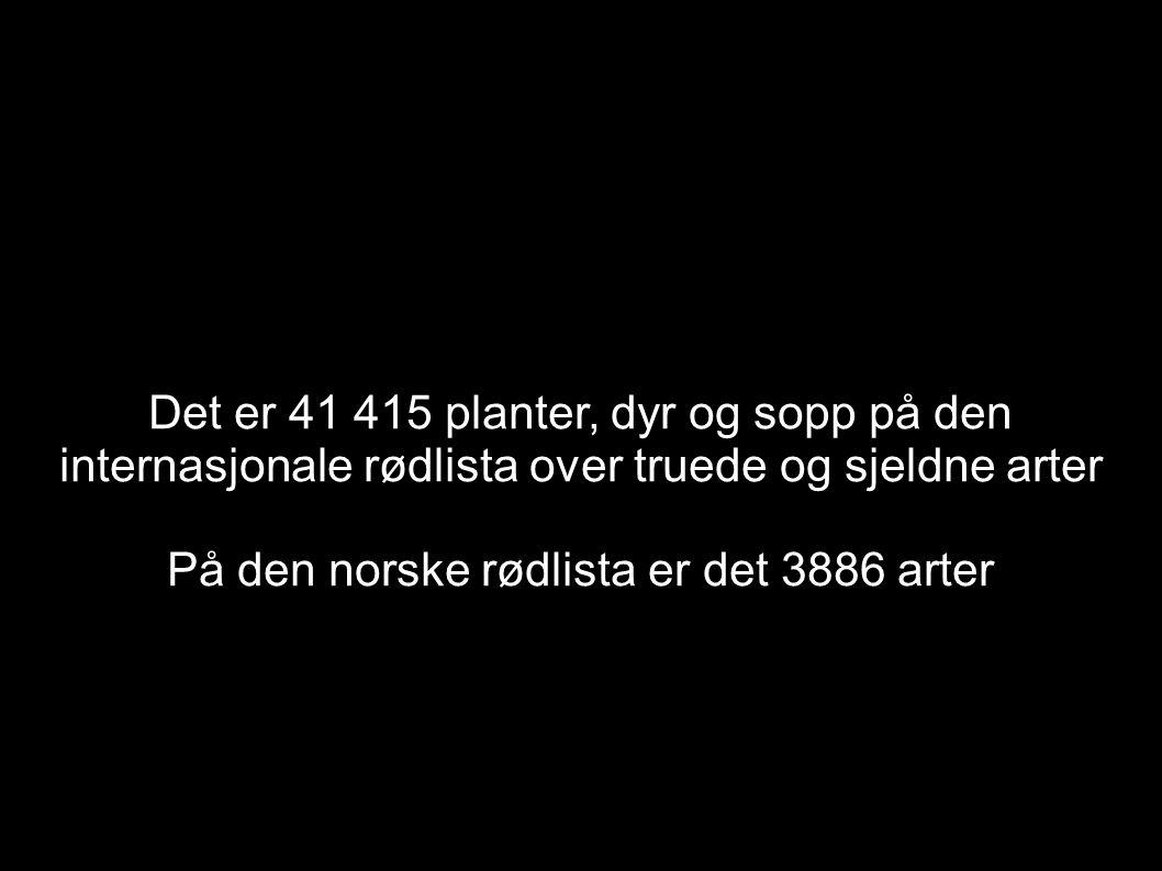 Det er 41 415 planter, dyr og sopp på den internasjonale rødlista over truede og sjeldne arter På den norske rødlista er det 3886 arter