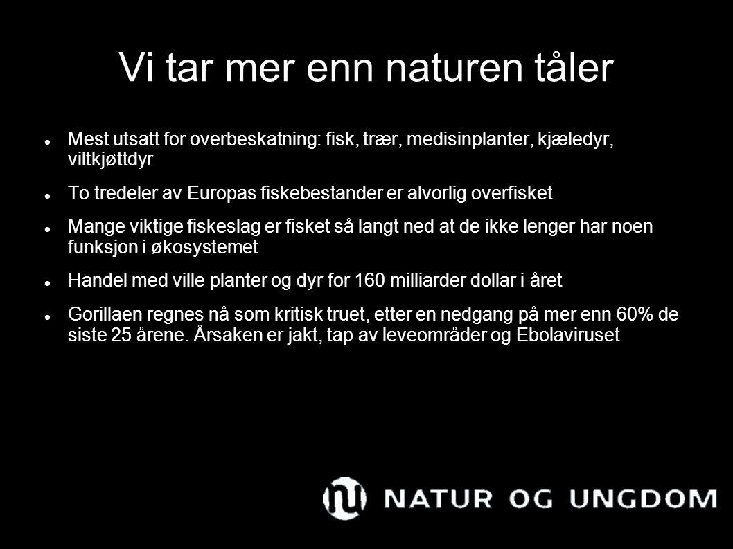 Vi tar mer enn naturen tåler Mest utsatt for overbeskatning: fisk, trær, medisinplanter, kjæledyr, viltkjøttdyr To tredeler av Europas fiskebestander