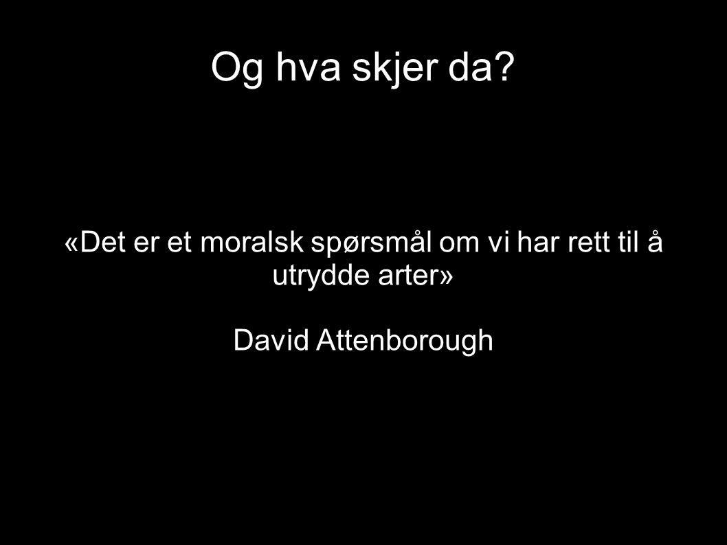 Og hva skjer da? «Det er et moralsk spørsmål om vi har rett til å utrydde arter» David Attenborough