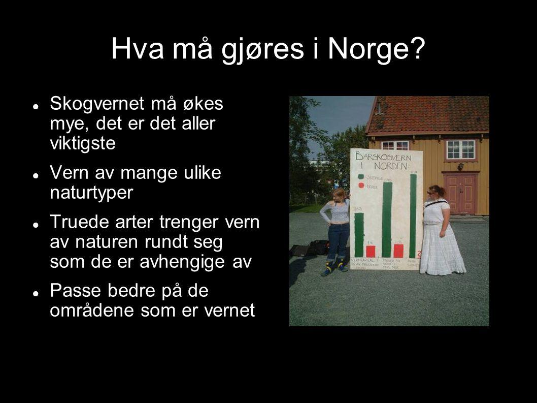 Hva må gjøres i Norge? Skogvernet må økes mye, det er det aller viktigste Vern av mange ulike naturtyper Truede arter trenger vern av naturen rundt se