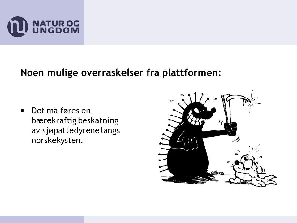 Noen mulige overraskelser fra plattformen:  Det må føres en bærekraftig beskatning av sjøpattedyrene langs norskekysten.