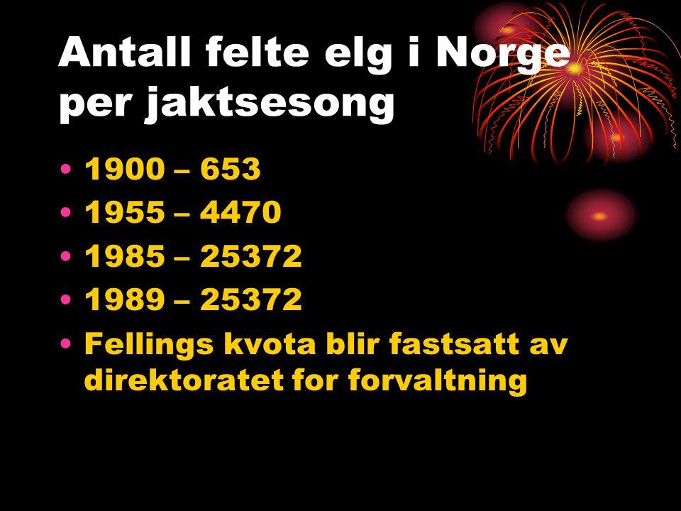 Antall felte elg i Norge per jaktsesong 1900 – 653 1955 – 4470 1985 – 25372 1989 – 25372 Fellings kvota blir fastsatt av direktoratet for forvaltning
