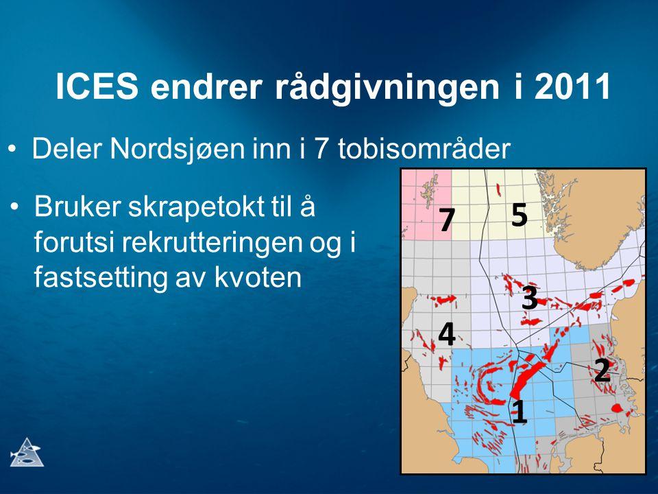 ICES endrer rådgivningen i 2011 Deler Nordsjøen inn i 7 tobisområder 1 2 3 4 7 5 Bruker skrapetokt til å forutsi rekrutteringen og i fastsetting av kvoten