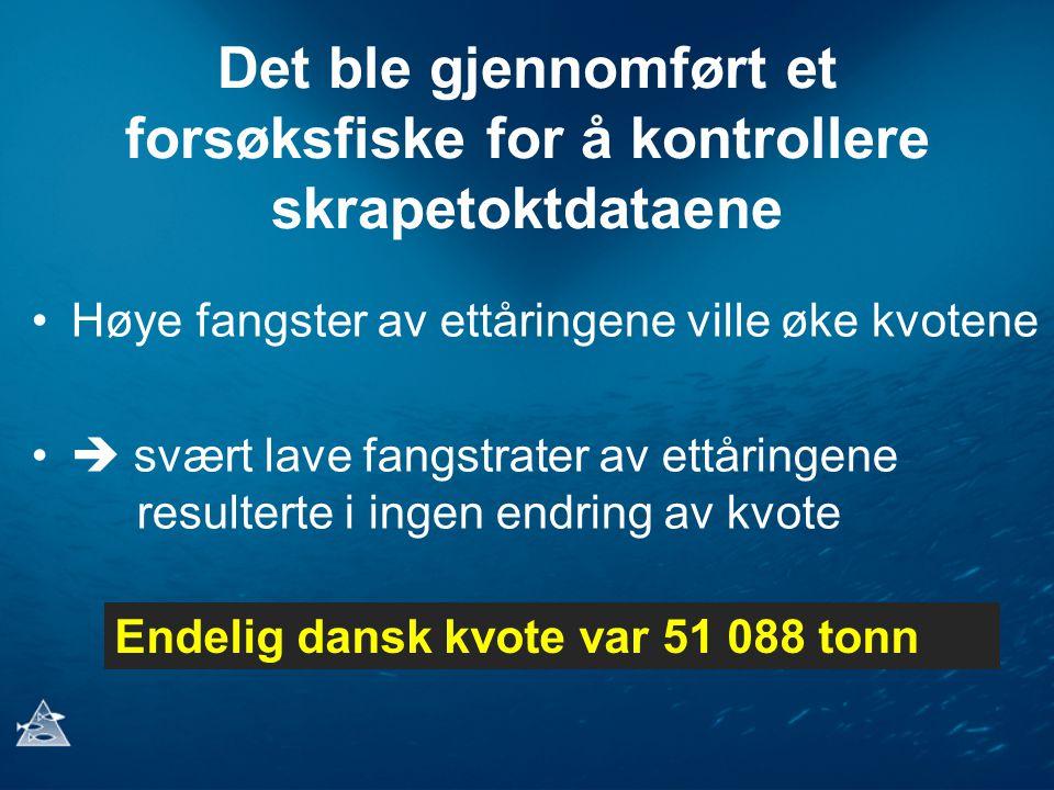 Det ble gjennomført et forsøksfiske for å kontrollere skrapetoktdataene Høye fangster av ettåringene ville øke kvotene  svært lave fangstrater av ettåringene resulterte i ingen endring av kvote Endelig dansk kvote var 51 088 tonn