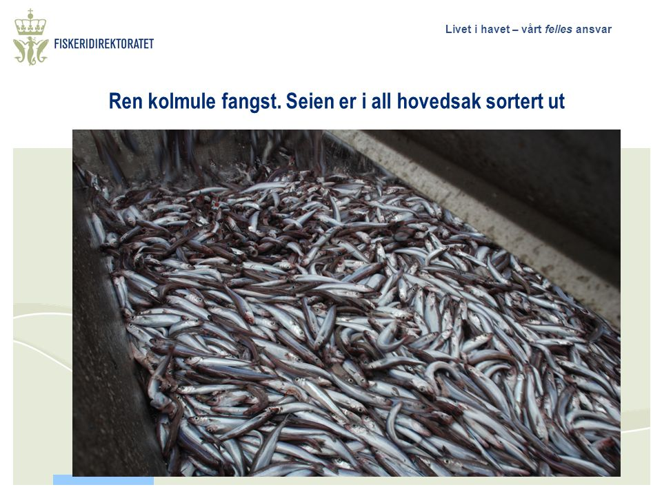 Livet i havet – vårt felles ansvar 12 – tonn sei et hal, oppsamlingspose Ombordtaking av utsortert sei.