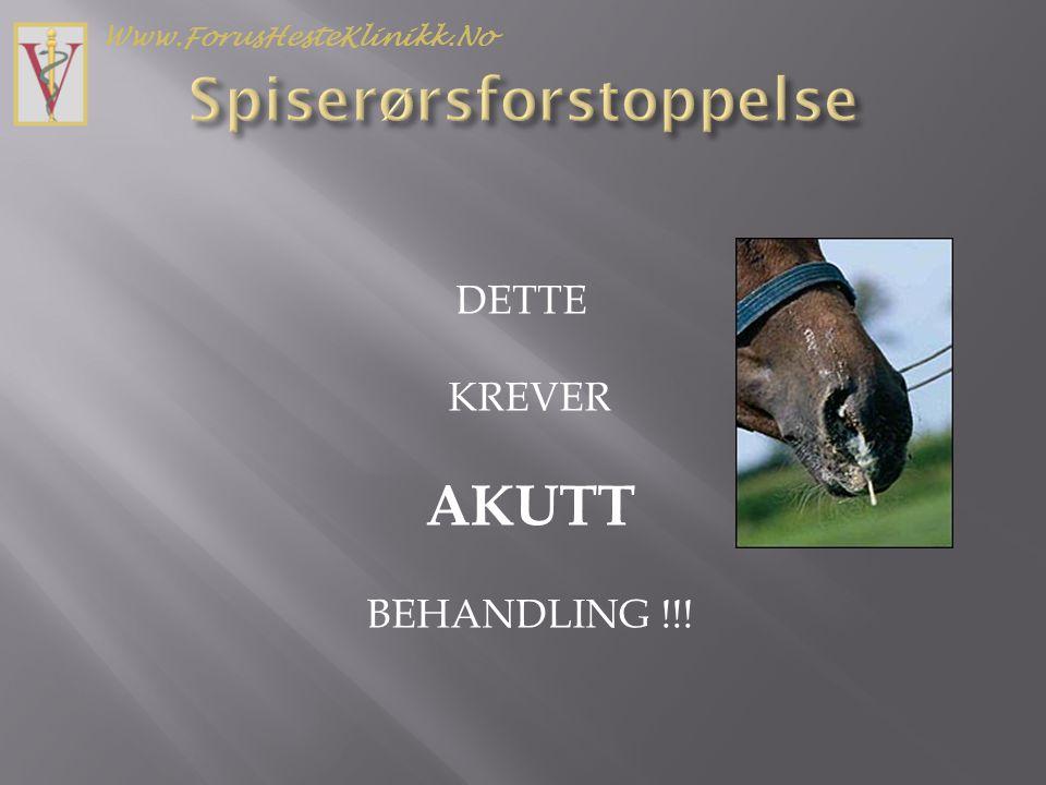 DETTE KREVER AKUTT BEHANDLING !!! Www.ForusHesteKlinikk.No