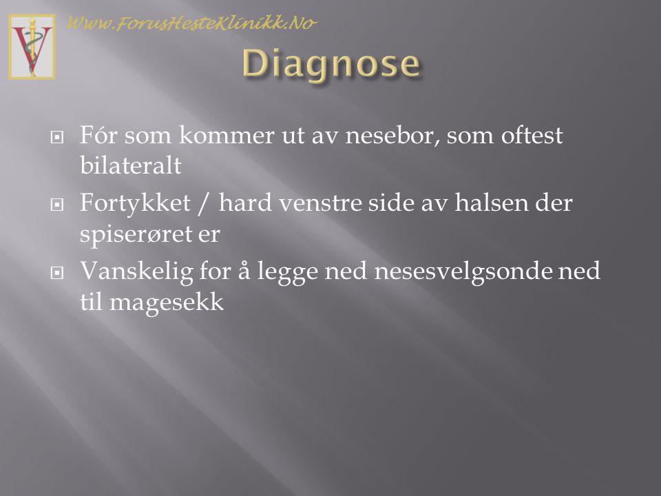  Sedasjon i vaskespiltet (Domosedan/Torbugesic fremfor Sedivet/Torbugesic) pga.