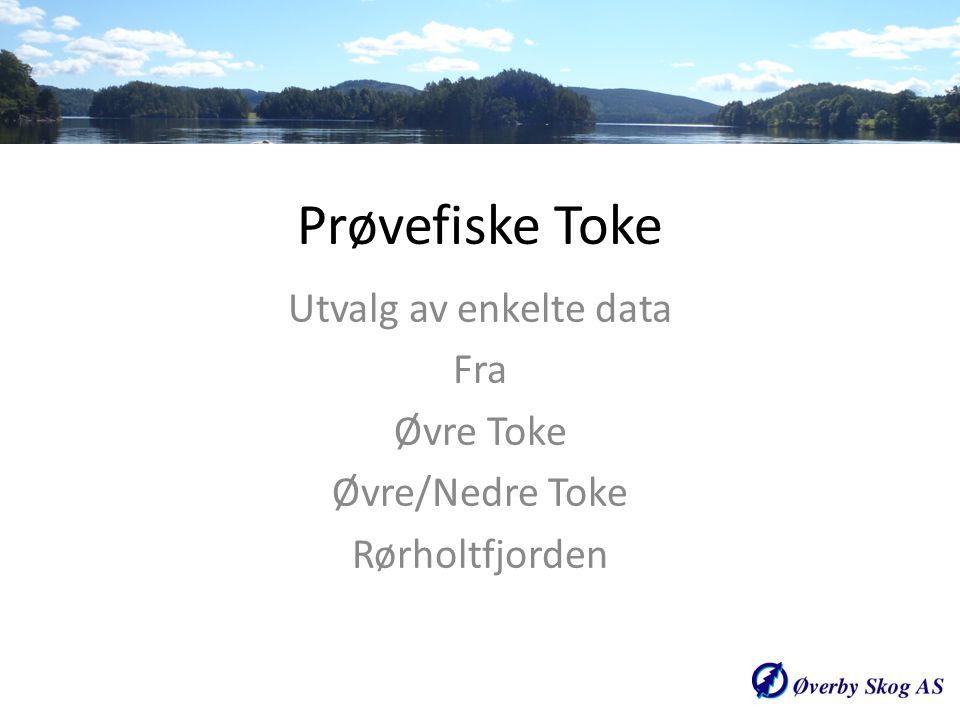 Prøvefiske Toke Utvalg av enkelte data Fra Øvre Toke Øvre/Nedre Toke Rørholtfjorden