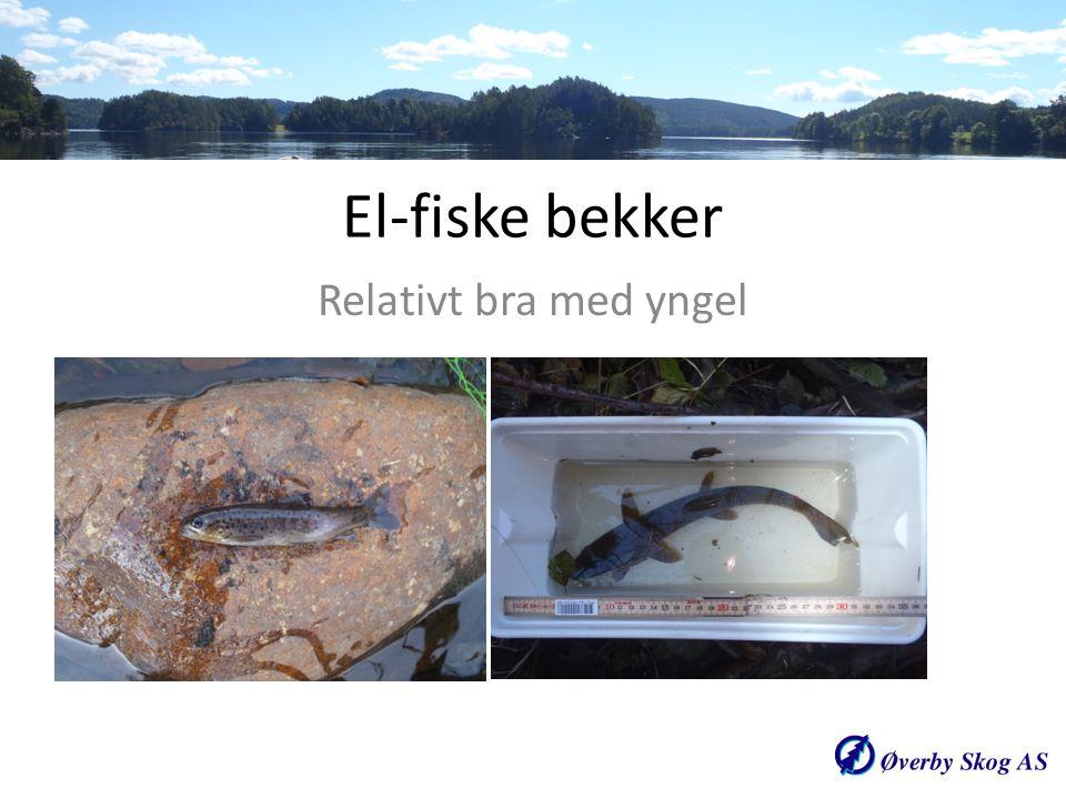 El-fiske bekker Relativt bra med yngel