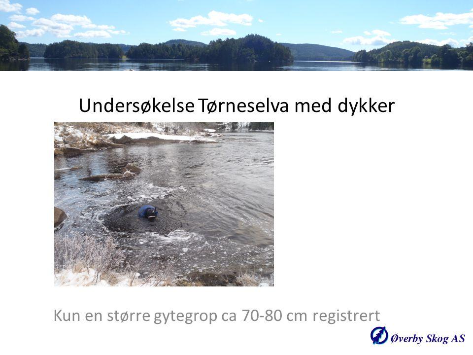 Undersøkelse Tørneselva med dykker Kun en større gytegrop ca 70-80 cm registrert