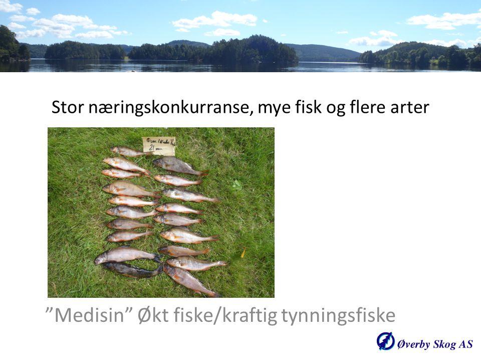 """Stor næringskonkurranse, mye fisk og flere arter """"Medisin"""" Økt fiske/kraftig tynningsfiske"""