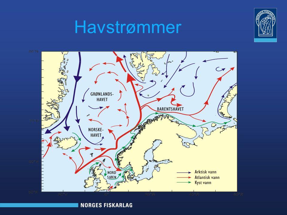 Forventninger Verdiøkning i fangstleddet Økt uttak av sjøpattedyr Fortsatt sterk utvikling innen teknologi Satsing på stadig bedre råstoffkvalitet Bedre utnyttelse av biprodukter Økt markedskunnskap Tilfredsstillende kompetanse på arbeidskraft Fører til økte inntekter for Norge som nasjon