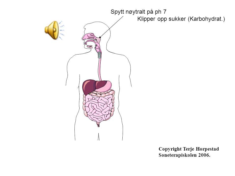 Spytt nøytralt på ph 7 Klipper opp sukker (Karbohydrat.) Copyright Terje Horpestad Soneterapiskolen 2006.