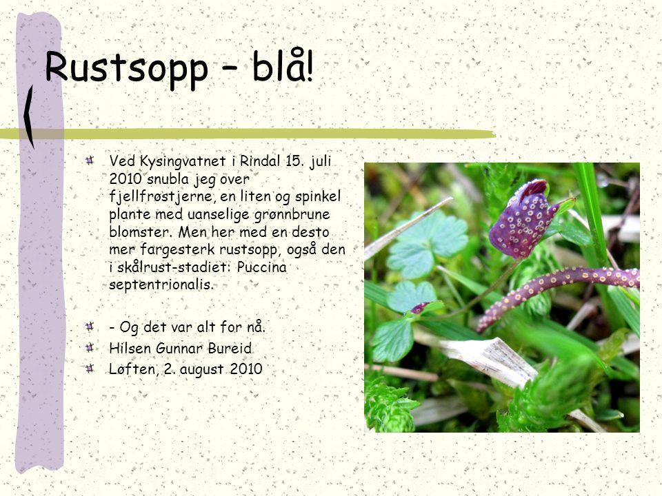 Rustsopp – blå! Ved Kysingvatnet i Rindal 15. juli 2010 snubla jeg over fjellfrøstjerne, en liten og spinkel plante med uanselige grønnbrune blomster.