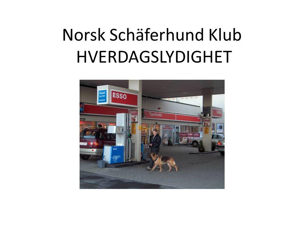Norsk Schäferhund Klub HVERDAGSLYDIGHET Momenter – innlæring 1.Hunden tas i utgangstilling og gis KO sitt .
