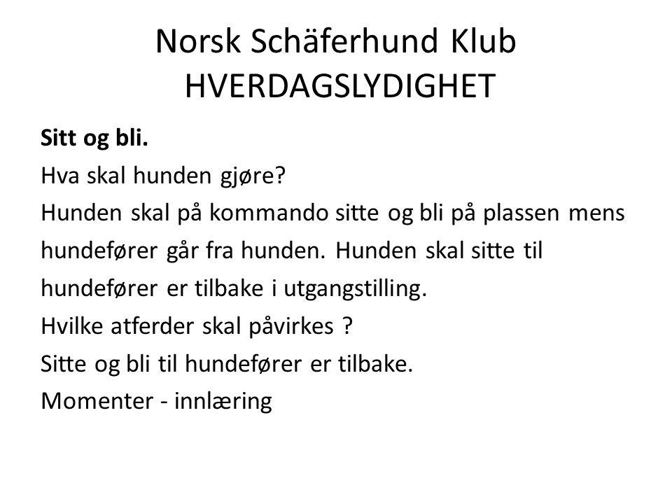 Norsk Schäferhund Klub HVERDAGSLYDIGHET Sitt og bli.