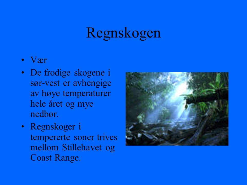 Regnskogen Vær De frodige skogene i sør-vest er avhengige av høye temperaturer hele året og mye nedbør.