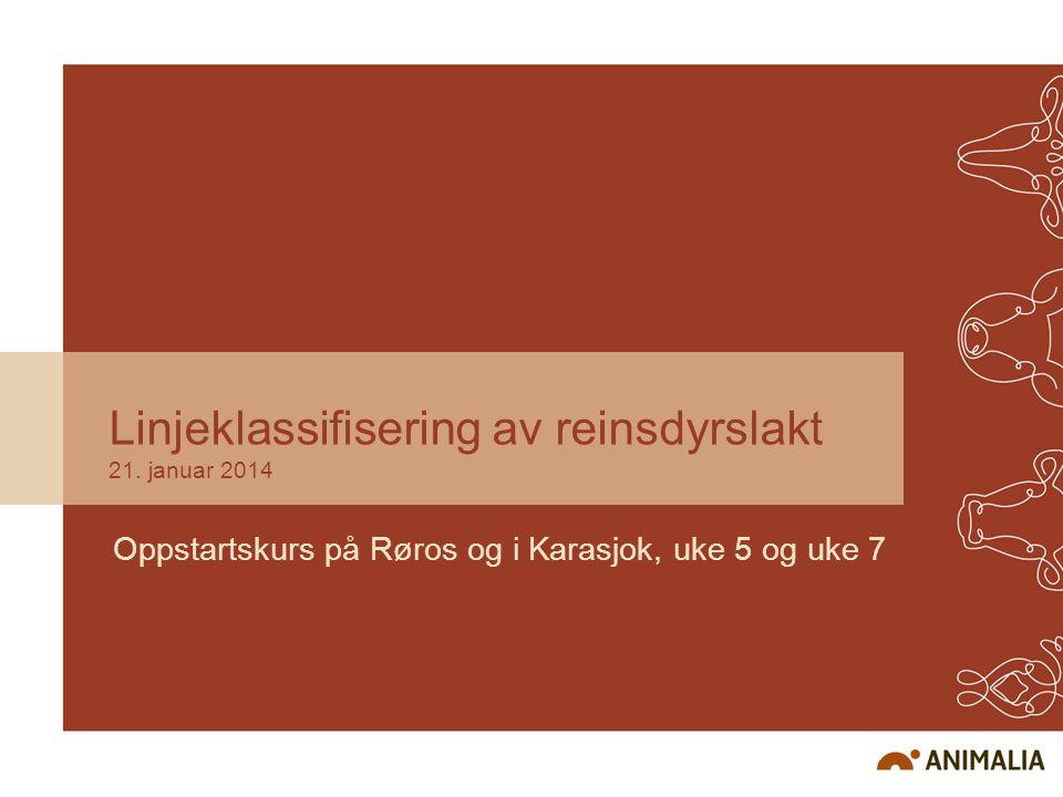 Linjeklassifisering av reinsdyrslakt 21. januar 2014 Oppstartskurs på Røros og i Karasjok, uke 5 og uke 7