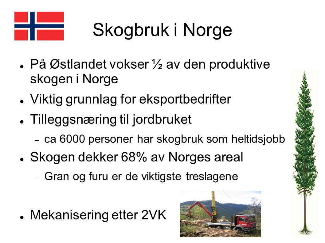 Skogbruk i Norge På Østlandet vokser ½ av den produktive skogen i Norge Viktig grunnlag for eksportbedrifter Tilleggsnæring til jordbruket  ca 6000 p