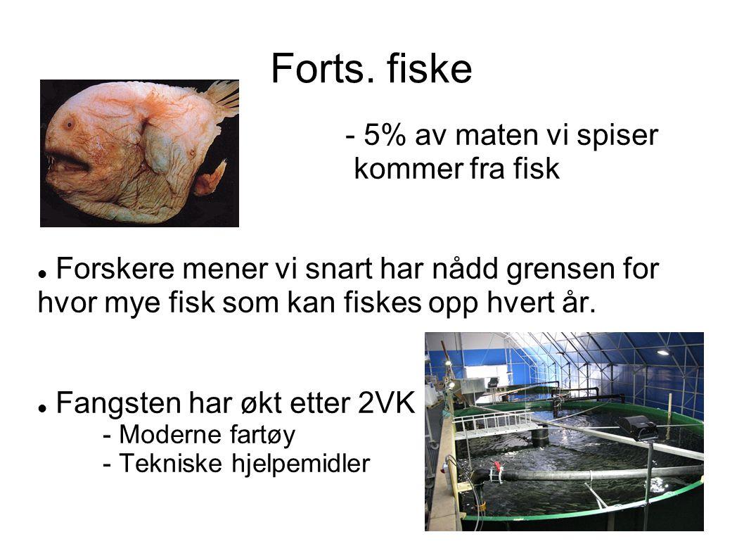 Forts. fiske - 5% av maten vi spiser kommer fra fisk Forskere mener vi snart har nådd grensen for hvor mye fisk som kan fiskes opp hvert år. Fangsten